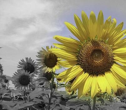 In The Sun by L and D Design Photography