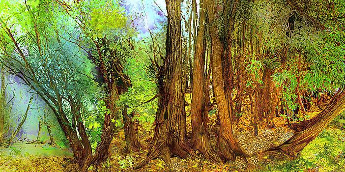 In the wood by Anne Weirich