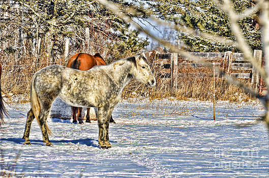 In The Yard by Whispering Feather Gallery