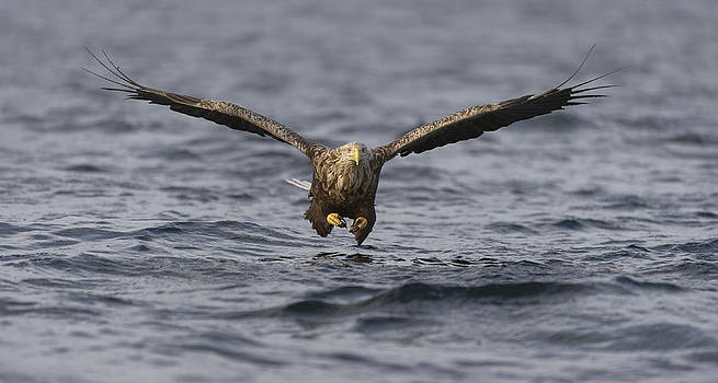Incoming by Andy Astbury
