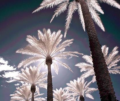 Infrared Palms by James Walsh