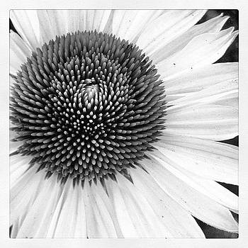 Inside Daisy Bw by Susan Smela
