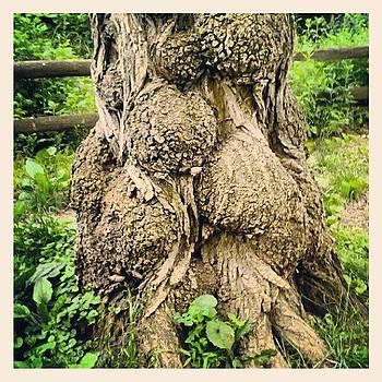 Interesting #tree by David F