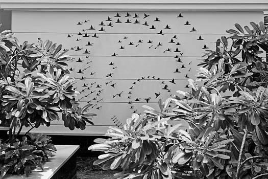 Kantilal Patel - Internal garden pond bird feature