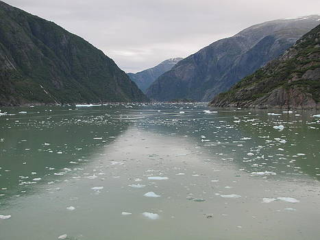 Into the Arctic by Barbara Chachibaya