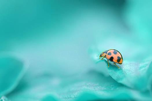 Into the blue by Handri Fitrido