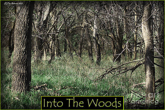 Into The Woods by Tom Andrews