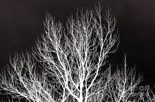 Emily Kelley - Inversed Tree Silhouette
