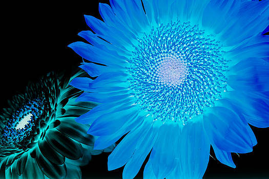 Inverted Flowers by Alhaji Samura