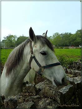 Ireland Horse by ShatteredGlass Photography