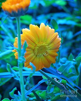 Anne Ferguson - Iridescent Flowers