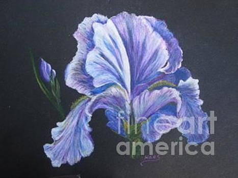 Iris Blues by Fran Haas