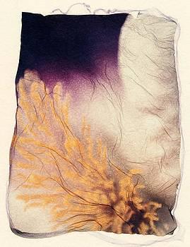Iris by Gwen Strahan