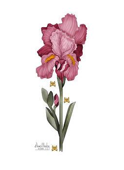 Iris I by Anne Norskog
