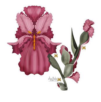 Iris III  by Anne Norskog