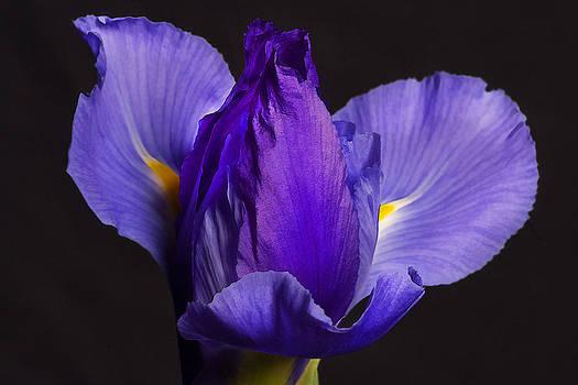 Iris Single by Christopher Brown