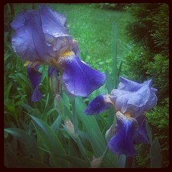 Iris Twins by Christy Bruna