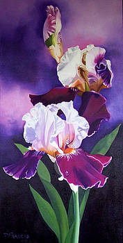 Irises by Donna Francis
