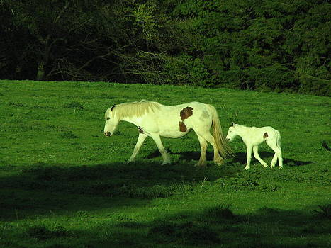Joseph Doyle - Irish Piebald Mare and New-Born Piebald  Foal
