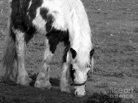 Joseph Doyle - Irish wild horses in black and white.