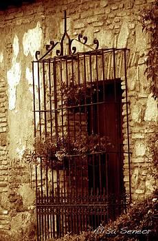 Iron Window by Alisa Seneor