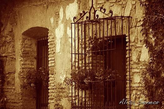 Iron Window n Door by Alisa Seneor