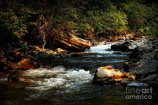 Isabella Creek by Steve Patton