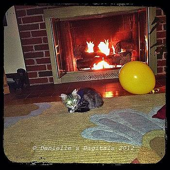 Isis In Front Of The Fireplace by Danielle McNeil