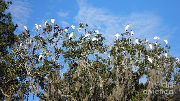 Island Birds by Kris Sperring