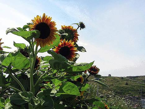 Island Sunflowers by J R Baldini M Photog Cr