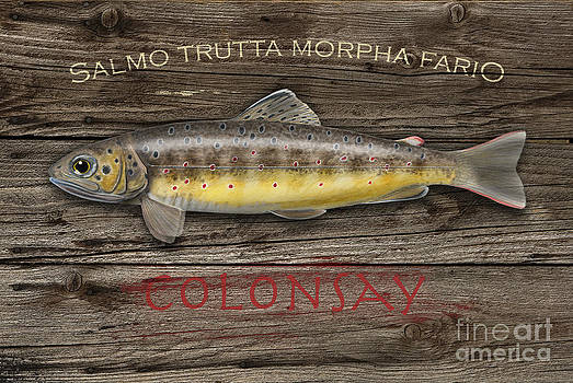 Isle of Colonsay - Brown Trout Salmo Trutta - Hebrides - Islay - Jura - Skye - Mull - Fish Sign  by Urft Valley Art