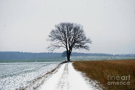 Isolated by Nancie Teresa