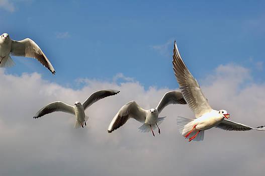 Istanbul Seagulls by Atalay Karacaorenli