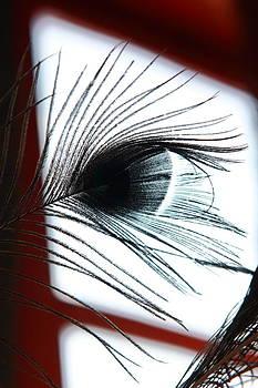 It's in the Eye by Don Krajewski
