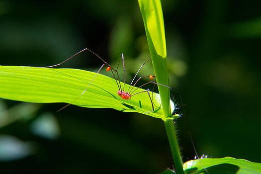 Itsy Bitsy Spider by Frank Pietlock