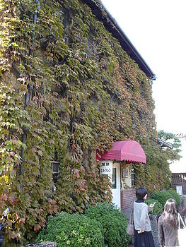Ivy Walls by Chris Wolf