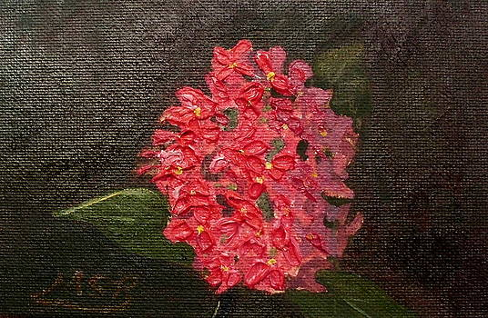 Ixora Bloom by Maria Soto Robbins