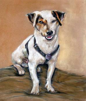 Jack Russell by Tanya Patey