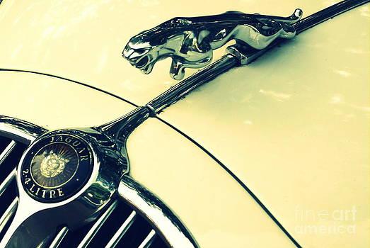 Jaguar - vintage by Vishakha Bhagat
