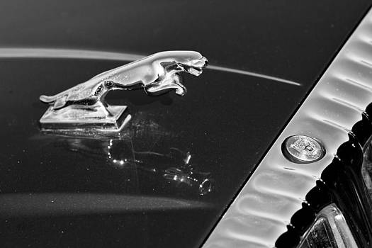 James BO  Insogna - Jaguar Hood Ornament in Black and White