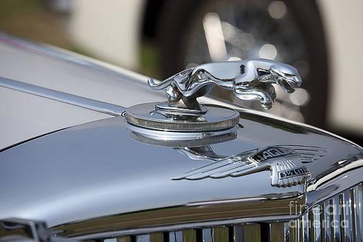 Jaguar by Tad Kanazaki
