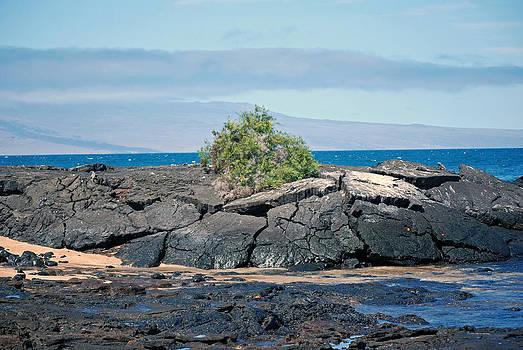 Harvey Barrison - James Bay