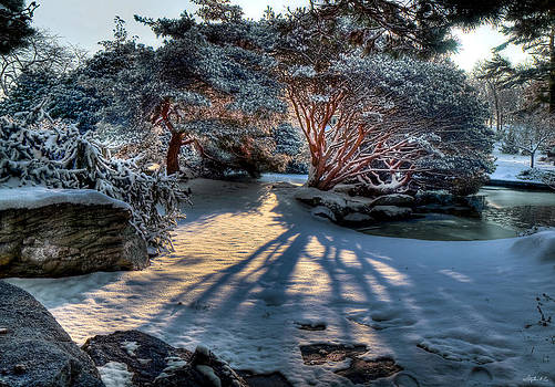 Japanese Garden at Sunrise by Stephen EIS