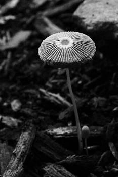 Japanese Umbrella Mushroom by Penny McClintock