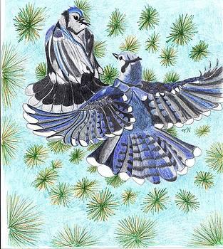 Jays by Tony  Nelson