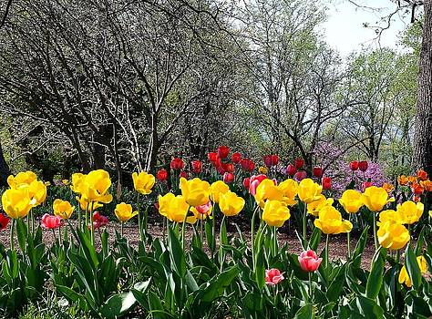 Jefferson's Tulips by Jim Goldseth