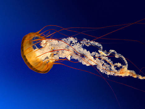 Jelly by Johnny BeGood
