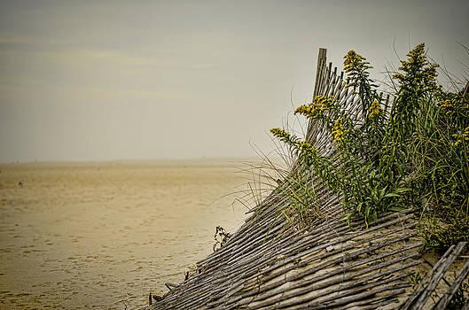 Heather Applegate - Jersey Shore