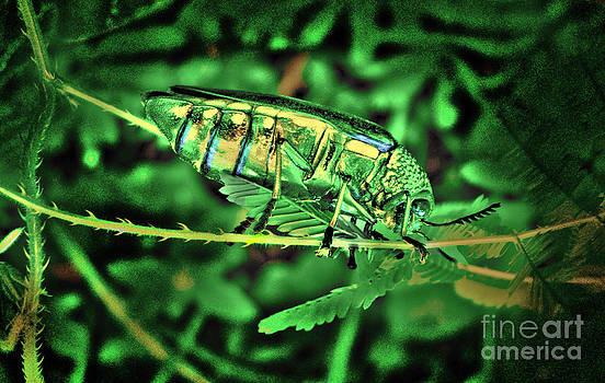 Roy Foos - Jewel Beetle