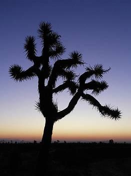 Don Kreuter - Joshua Tree at Dawn
